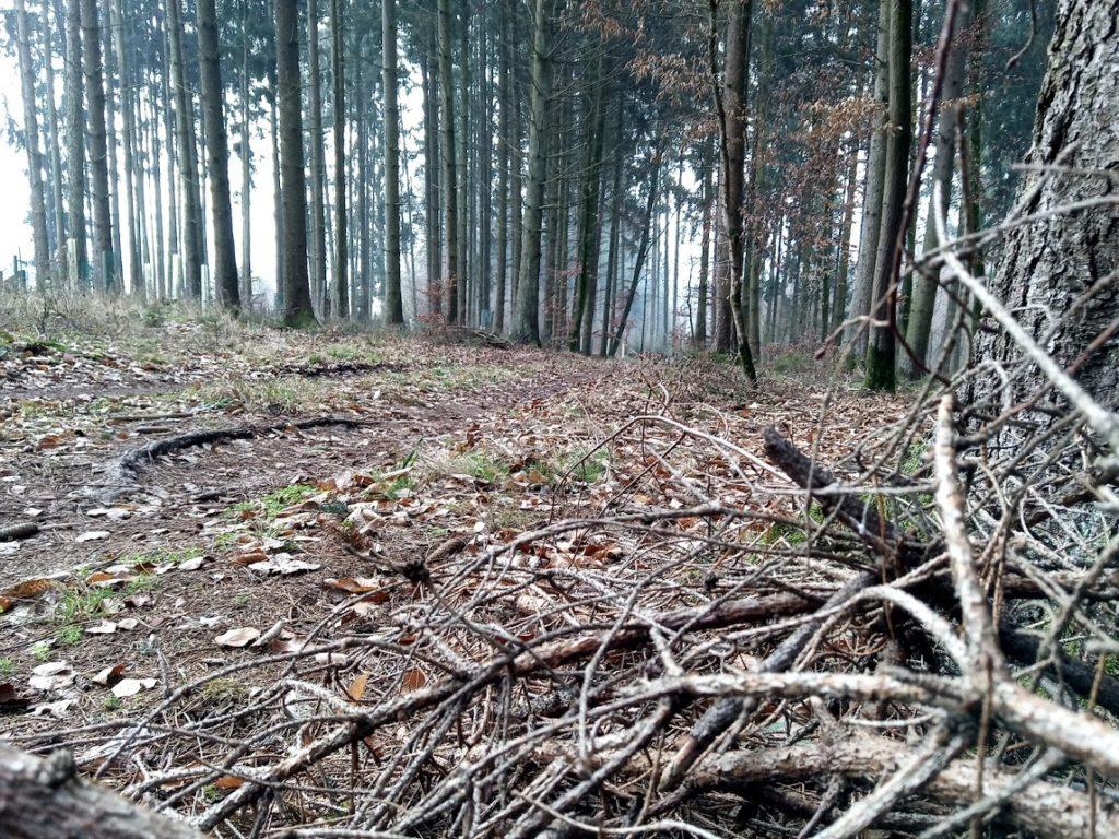 Abschied Wald Morgen