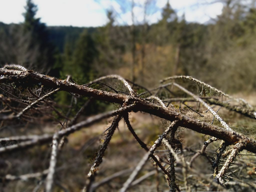 Wald Ast Baum