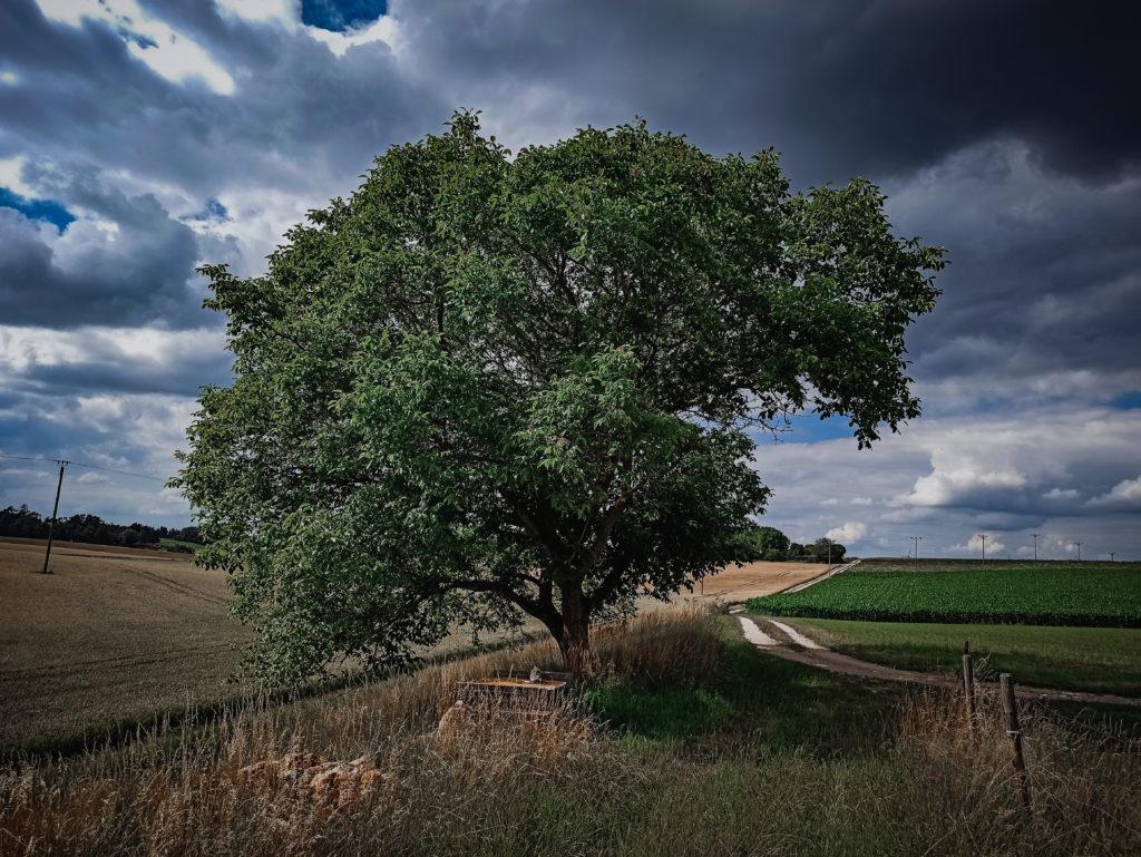 Baum by Waldenzeit.de