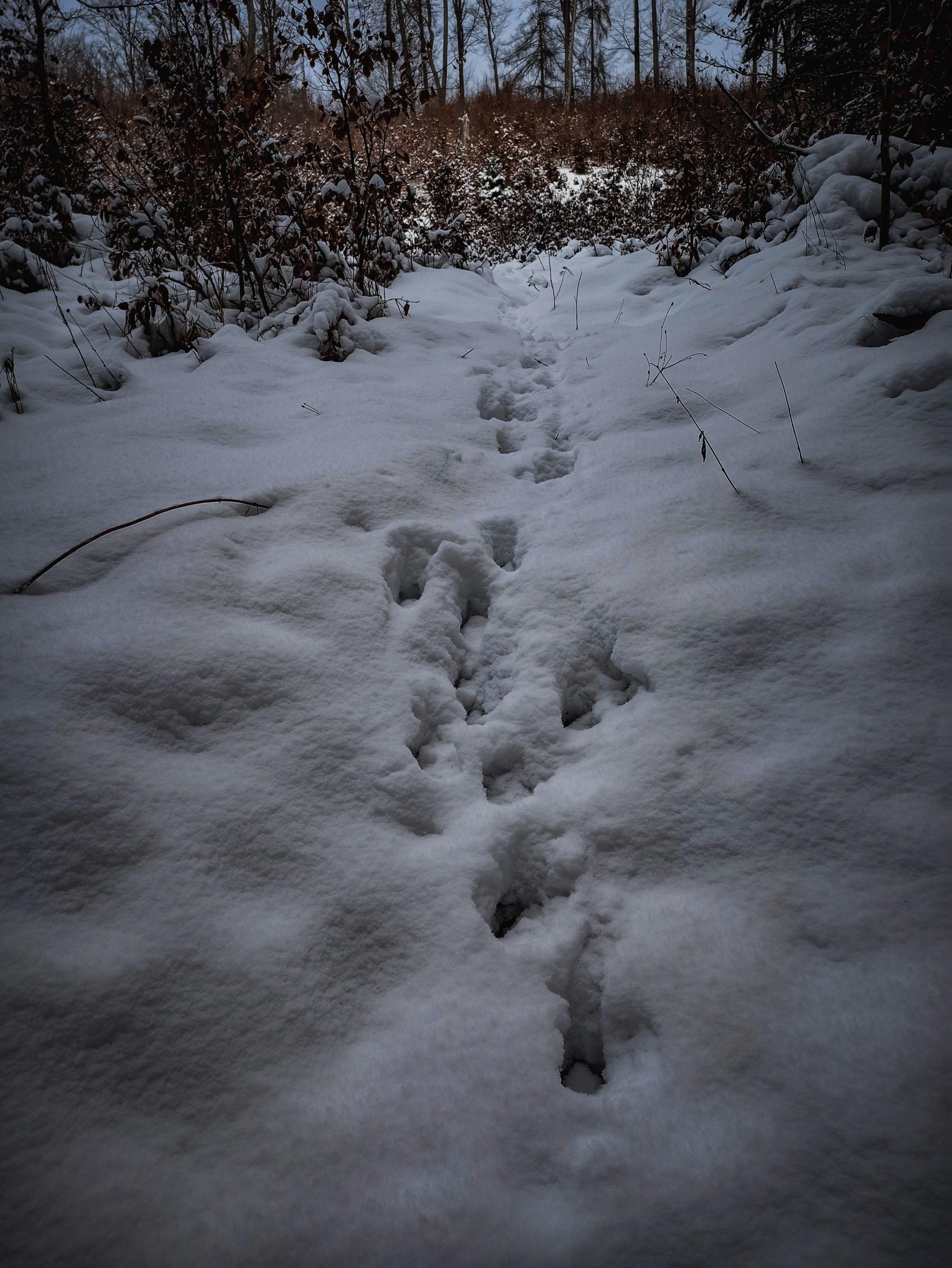 Tier Spuren im Schnee